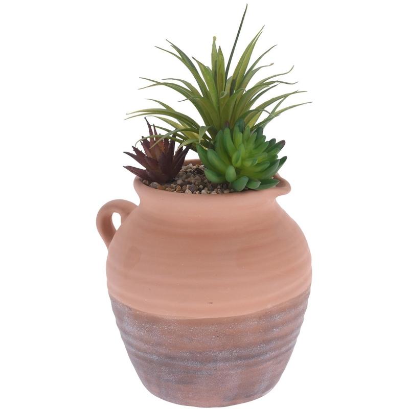 Διακοσμητικό Φυτό με Κασπό...